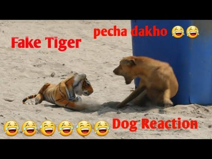 Fake Tiger Vs Dog Prank Video TRY NOT TO LAUGH CHALLENGE 2020 Funny Challenge Videos