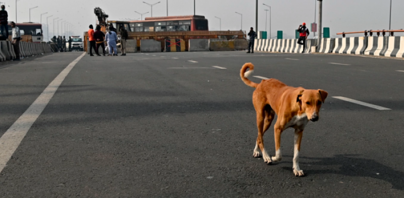 Crematorium for dogs in South Delhi Priest to perform rituals ashes to be stored for 15 days