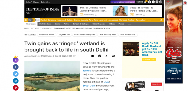 Twin gains as ringed wetland is brought back to life in south Delhi
