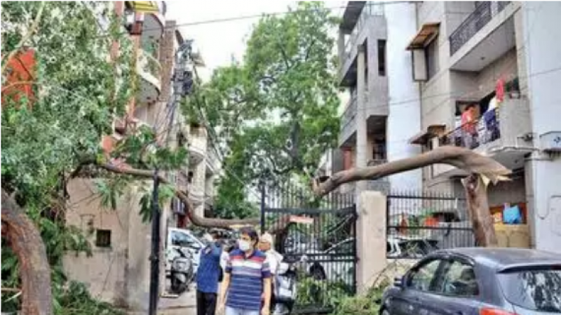 Late-night storm fells over 80 trees, outer and south Delhi worst hit
