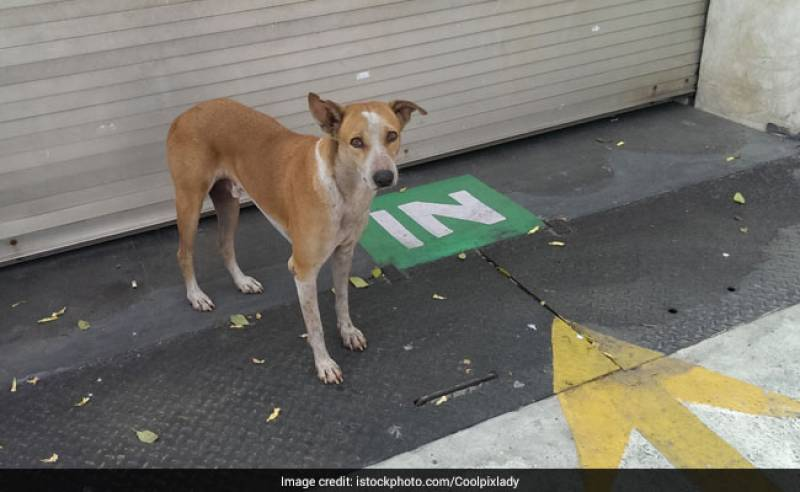 FIR Filed After Stray Dog Found Dead In South Delhi: Police