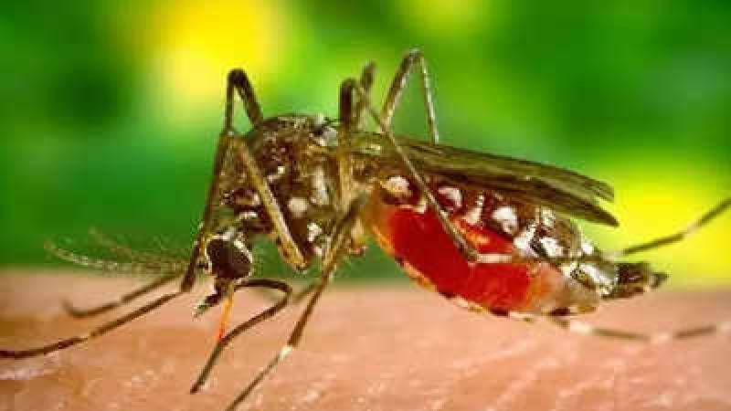As dengue cases rise, south Delhi civic body puts schools on notice