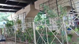 Delhi: South MCD restores vertical garden below Africa Avenue flyover