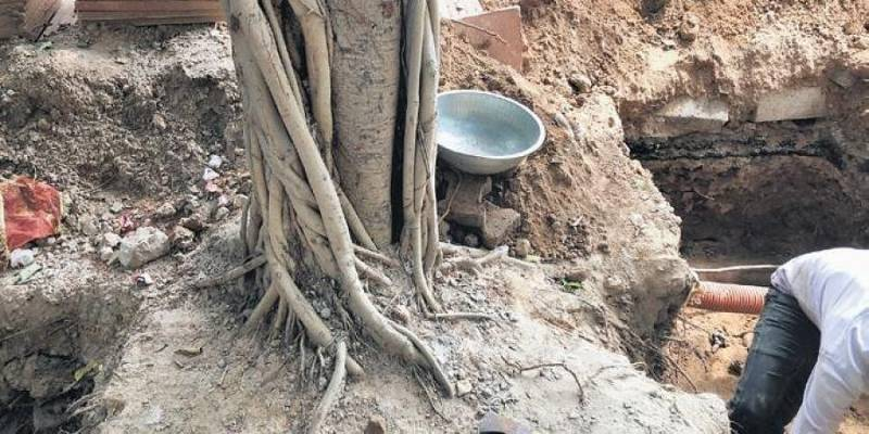 Pilkhan trees damaged in south Delhi amid digging for construction project