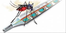 South Delhi Municipal Corporation to carry checking drive to curb dengue spread
